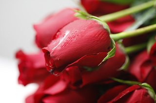 Where your Valentine's Day flowers may come from