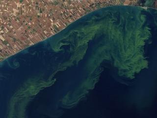 State warns residents of harmful algae blooms