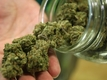 Legalizing pot: Insights from Colorado