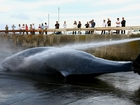 After hiatus Japan starts whaling for 'research'