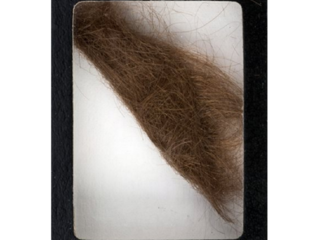 Lock of Lennon's hair expected to sell for $10K