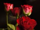 Pakistan district bans Valentine's Day