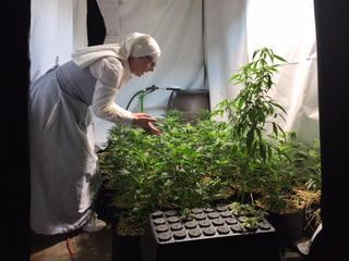 California cities to revisit pot bans