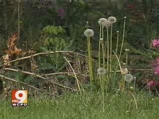 Is your lawn too tall? $500 fine in Cincinnati