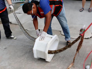 Thai man bitten by snake while using toilet