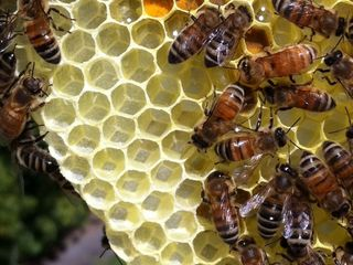 Man stung multiple times by bees in Ramona