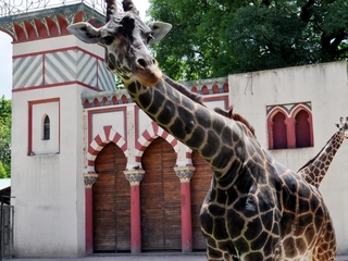 Argentina zoo frees thousands of animals