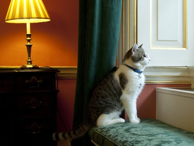 Cat belongs to the house, says David Cameron