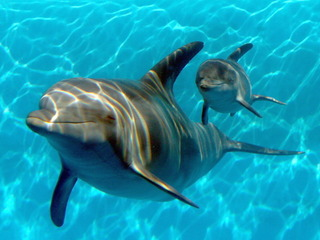 Feds propose ban on swimming with dolphins