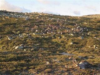 Strange lightning strike kills 300 reindeer