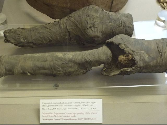 Experts finally identify these ancient knees