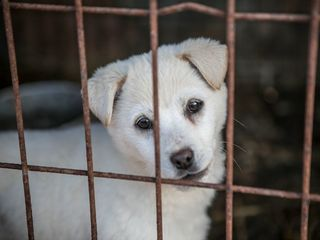 Pet store puppies spread infection
