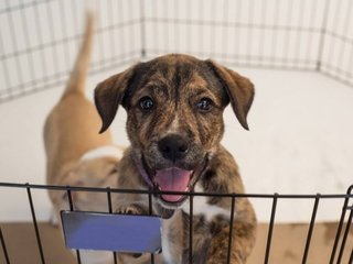 Calif. to make pet stores sell rescue animals