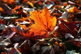 Where you can catch changing fall foliage in SD