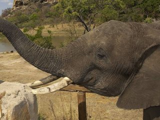 US reverses ban on elephant-trophy imports