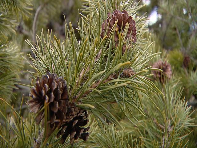 PKG PICKING A CHRISTMAS TREE 112317-mp4