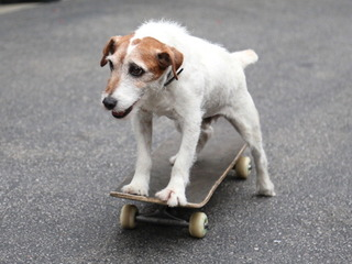 Dogs smarter than cats, science says
