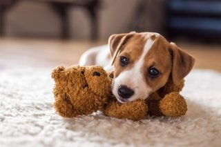 Warning: Spike in puppy illnesses
